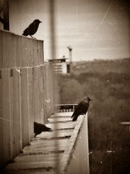 Cry of the Blackbirds by TheDeadStare
