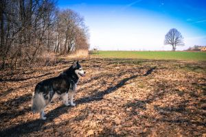 Rocky in the wild by Banera