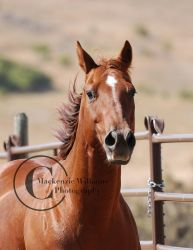 Copper Beauty by saudimack