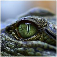 Crocodilian by GreenEyedHarpy