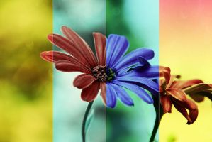 .:.Four Colors.:. by Ailedda