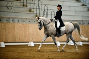 Dressage III by Colourize