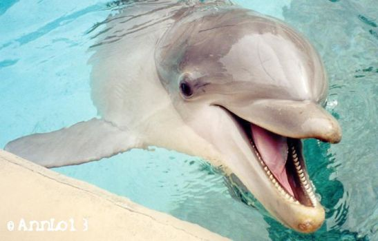Tango at the Dolphin Cove by annlo13