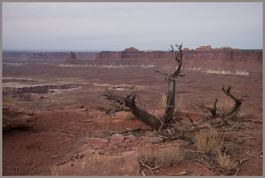 Canyonlands by Pinedrop