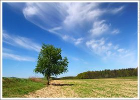 Tree and clouds by mjagiellicz