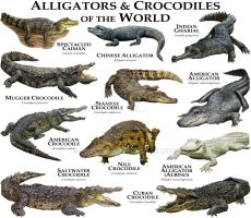 Alligators and Crocodiles of the World by rogerdhall