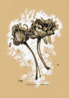 Two wilted roses by dasidaria-art
