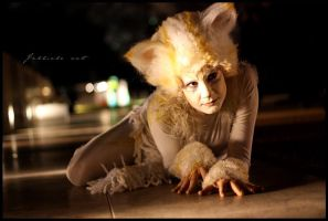Jellicle cat by Rollwurst