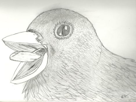 Sketch of a Bird by Le-Smittee