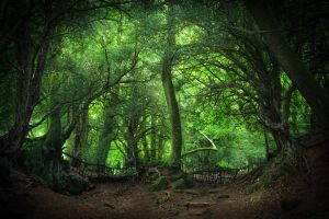 Enter Mirkwood by aw-landscapes