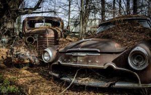 Junkyard Dawgs by FabulaPhoto