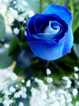 Blue roses 3 by MagicMirror2007