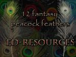 Peacock Feather Plumes by ED-resources