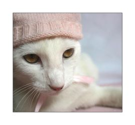 Cat in a hat by jennipenny