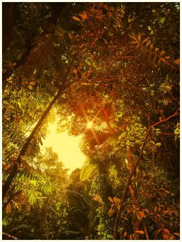 Rainforest by Sortvind