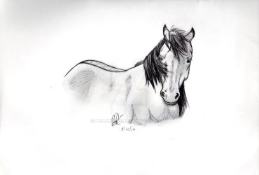 Trying Realistic Horse 2 by Leadmare