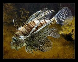 lion fish. by fading-memories
