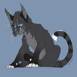 [at] kitty by nerfusia