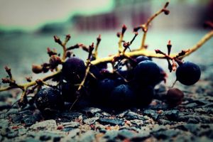 Grapes on the road by Bijou44