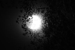 Eclipse in Black and White by operabutterfly