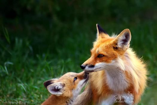 Mother And Cub V by Sagittor