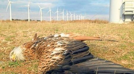Wind Power Slaughter: ex-USFWS Agent Speaks Out by Kajm