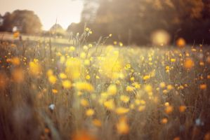 Yellow Meadow by WorldII