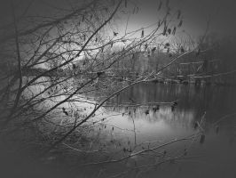 Pond and Marsh by GUDRUN355