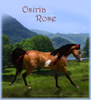 Osiria Rose by ZephyrineTheTigress