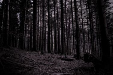 The Forbidden Forest by Sonificent
