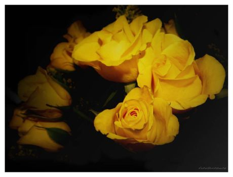 Yellow rose's  by gintautegitte69