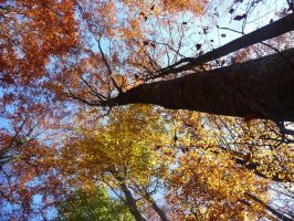 forest in autumn by AMYisC0P1C