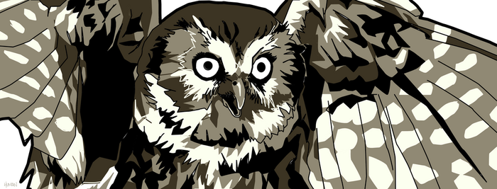 Owl by humanologue