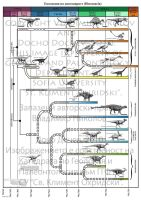Evolution of Dinosauria by T-PEKC