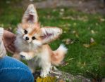 SOLD! Handmade Poseable toy Fennec Fox by MalinaToys