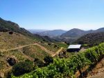 Malibu Wine Safari  by bironicheroine