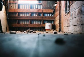 The Shearing Shed floor by balltastics2000