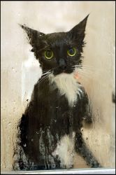 mia hates showers by sporto