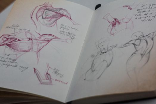 Anatomy sketchbook  1 by bouquiniste