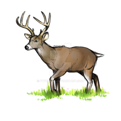 white-tailed deer by TTTEFANS