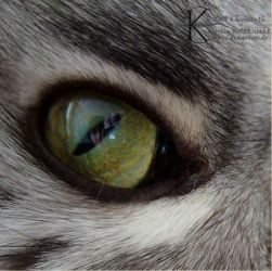 In the Eye of the Coon by Khyrsanth
