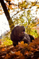 autumn 2012 by Tattoomaus78