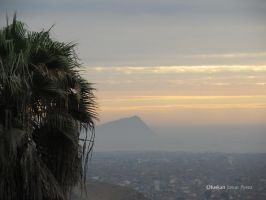 Palm tree in the City by Ofuskan