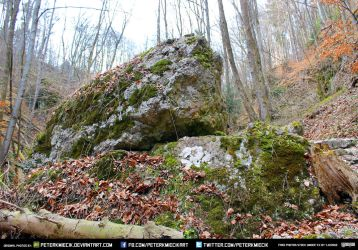 Free Stock Rocks Trees Leafs Forest Roots by PeterKmiecik