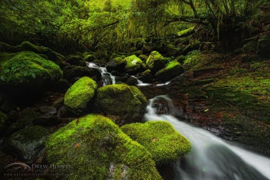 Lush Tranquility by DrewHopper