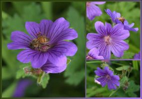 Bee and Blue Flower by aquifer