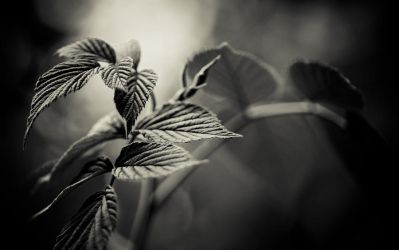 mt061110_1bw by trausse