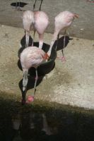 San antonio zoo picture 30 by Inya-spring