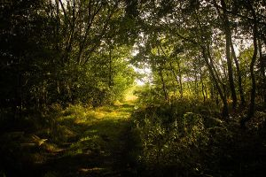 154. magical forest III by littleconfusion