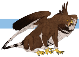 Griffon by Sketchmatters